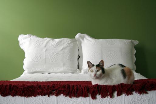 Bett, grün mit Spitze