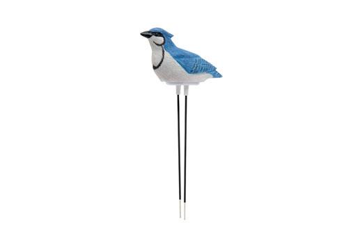 Sing Vogel Wasserknappheit