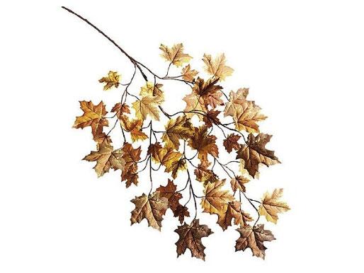 Ahornzweig Herbst